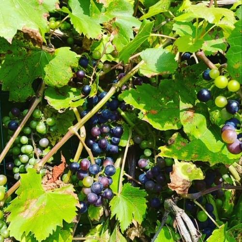 béthune,jean luc romero michel,raisins